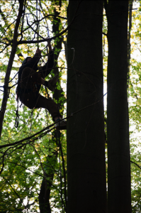 Reoccupation of the Hambach Forest in Germany